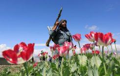 Центральная Азия: как остановить экспансию талибов?